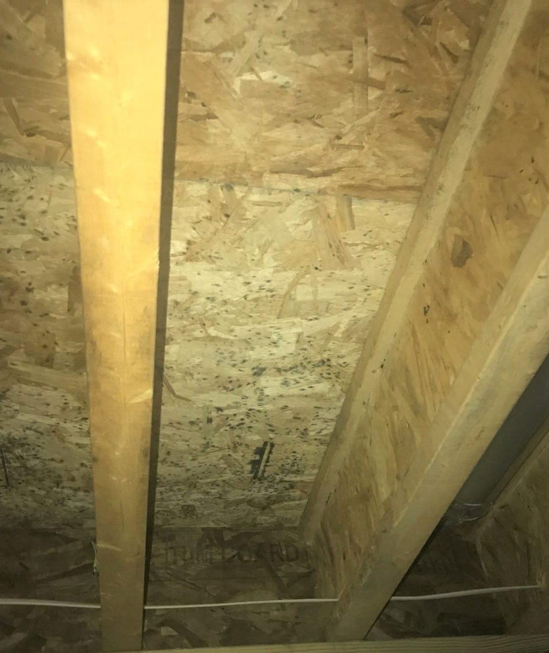 Mold – Basement Ceiling – New Construction