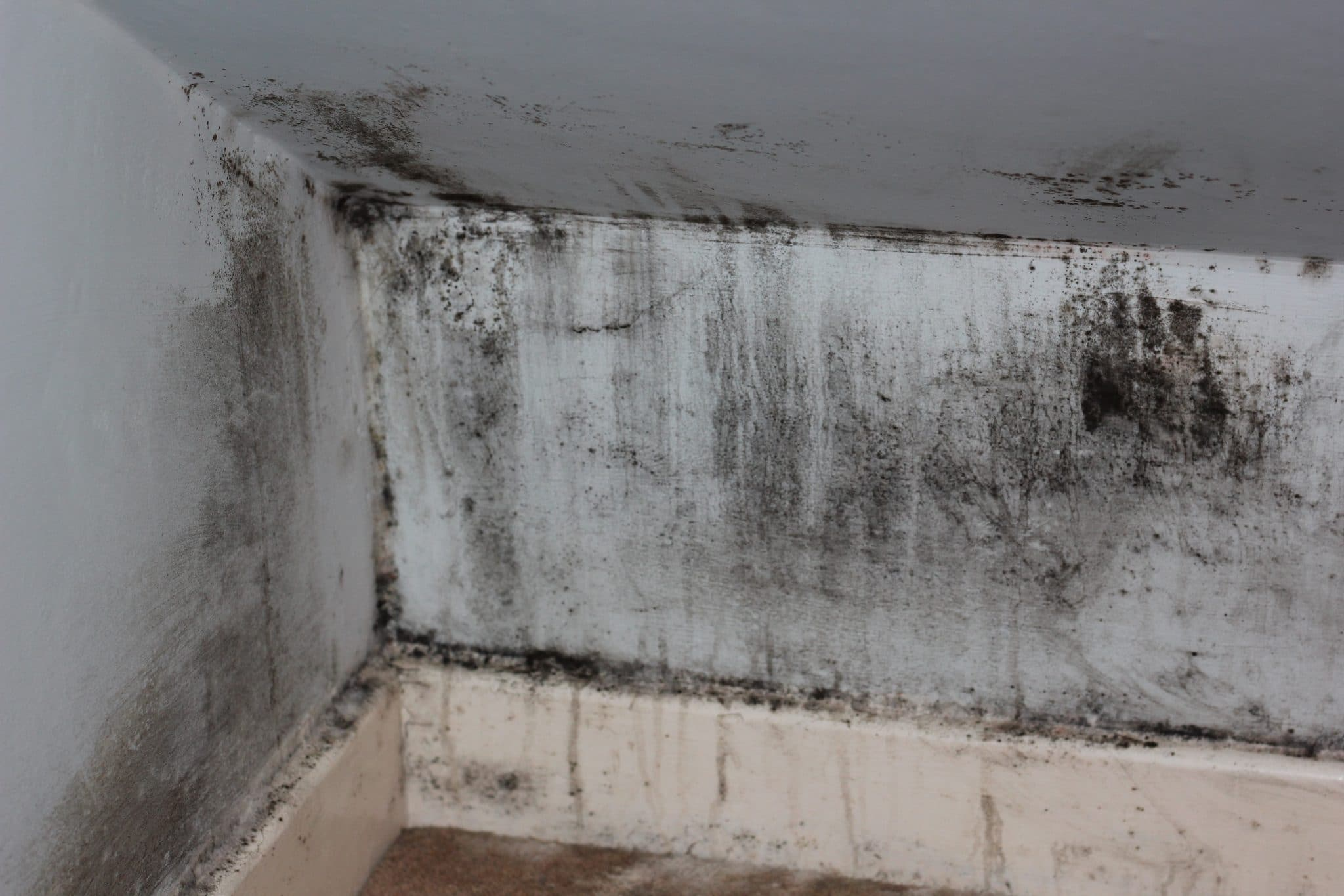 mold cleanup in kenosha, the dry guys, kenosha mold removal service